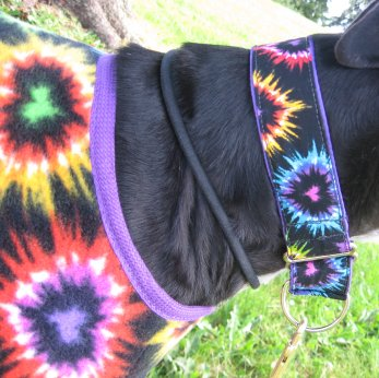 Heart My Hound matching coat and collar!  Discount if bought as a matching pair!